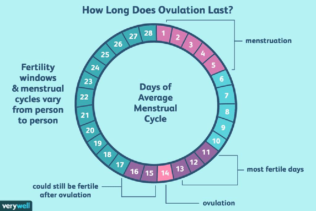 Despues de la ovulacion