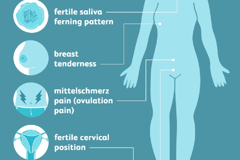 8 علامات الإباضة لاكتشاف معظم وقت الخصوبة